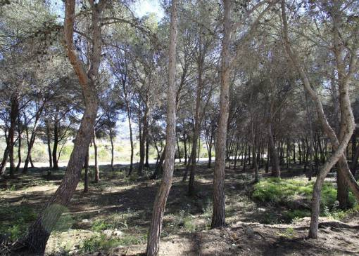 Plot of Land - Resale - Moraira - Moraira